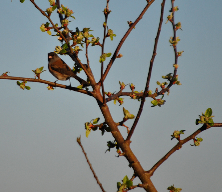 A bird in a tree with buds