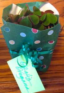 Oxalis wrapped in a gift bag