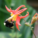 Bee on Columb