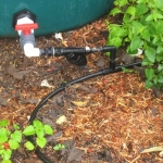rain barrel feeding into soaker hose