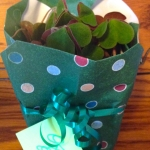 gift-wrapped potted plant