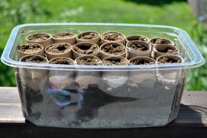 Plastic box with tp roll seed pots