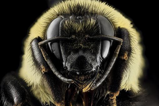 061615_smaller_bee