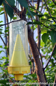 A simple yellow jacket trap