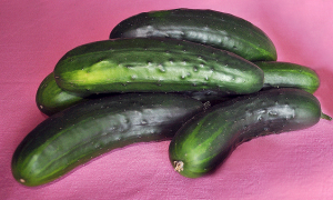 A bunch of freshly picked cucumbers