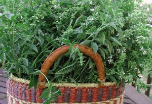Harvested Basil