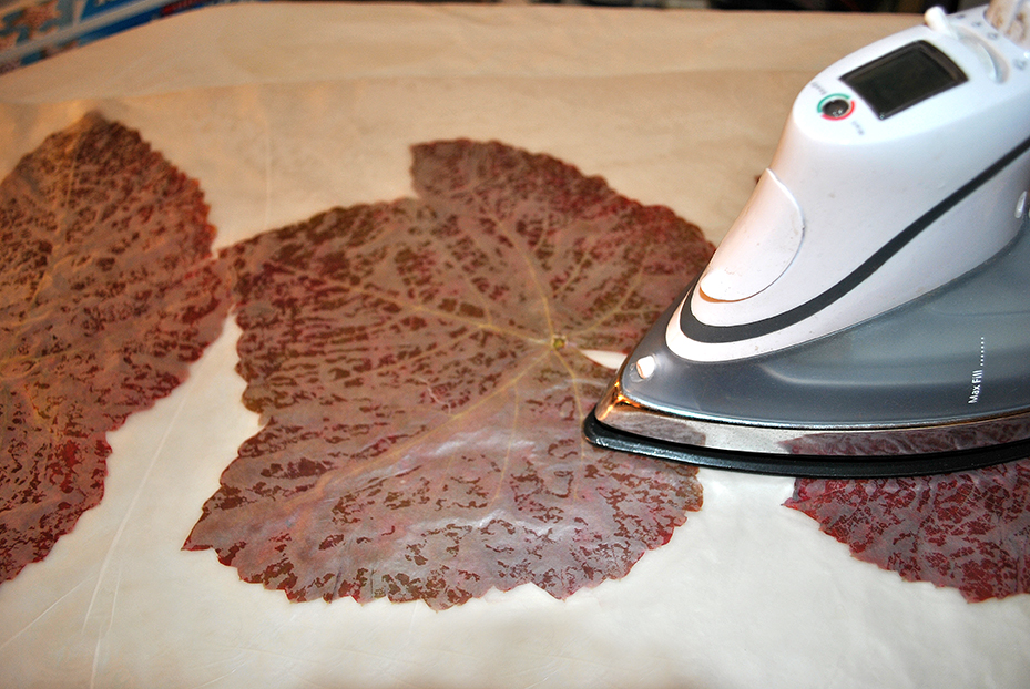Leaves being ironed to transfer the wax