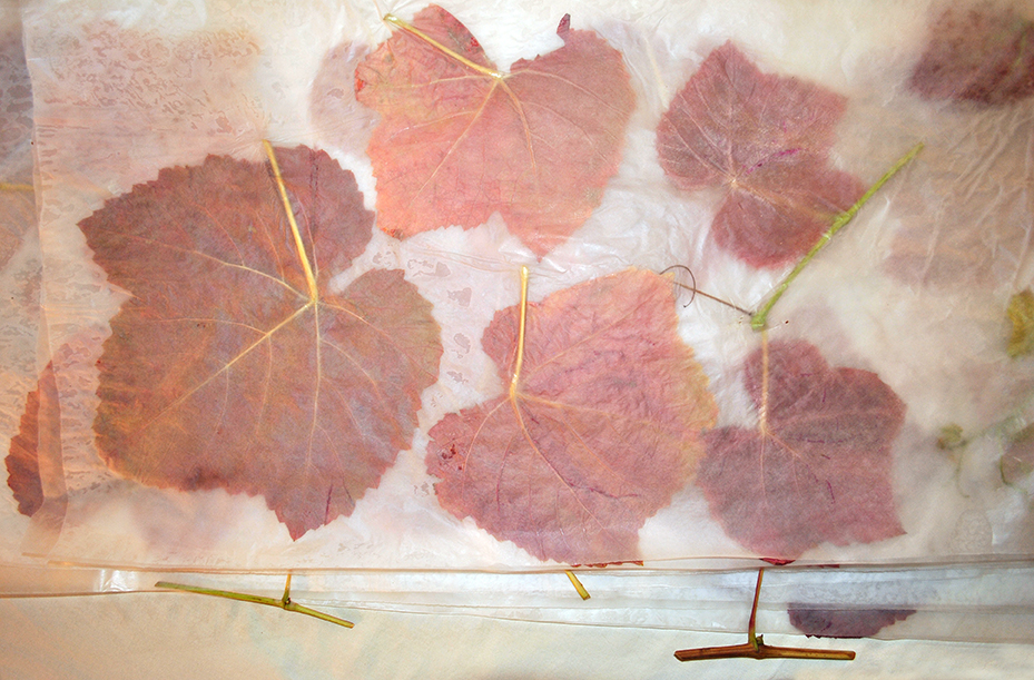 A stack of waxed leaves ready for storage