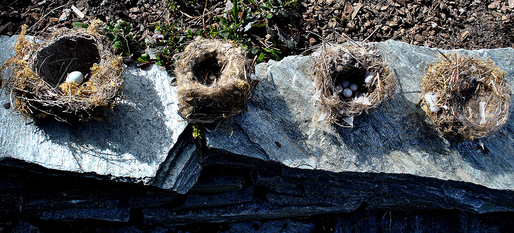 Four found nests