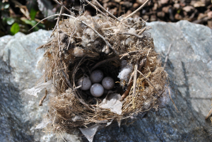 Found nest—too late in the season
